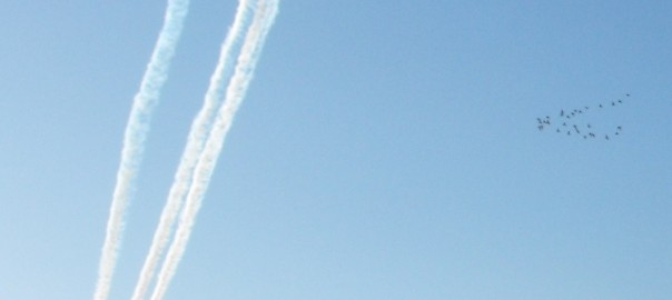 Birds and Red Arrows - 31-08-14